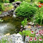 Colorful Perennials & Shrubs surrounding Waterfall in Hastings MN